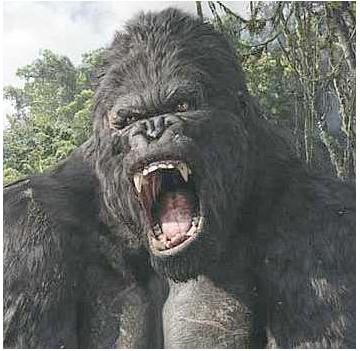 Monyet Alpha Male :P